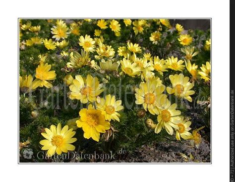 Pflanzen Im März by Trockenheitsresistente Pflanzen