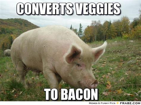 Pig Memes - trending cute guinea pigs memeaddicts