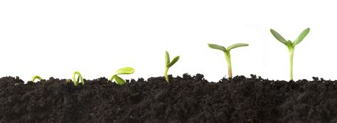 growing plants how to adopt a mindset of growth