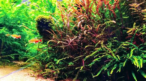 gallon aquascape nature aquarium aquascaping youtube