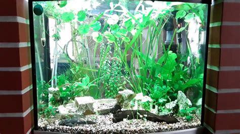 sera led beleuchtung sera led aquarium beleuchtung nach 2 wochen