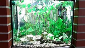 Sera Led Beleuchtung : sera led aquarium beleuchtung nach 2 wochen youtube ~ Eleganceandgraceweddings.com Haus und Dekorationen