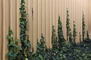 Wie Schnell Wächst Efeu : messe kalkar fassadenbegr nung mit kletterpflanzen an polygr n kletterhilfen rankhilfen aus gfk ~ Orissabook.com Haus und Dekorationen