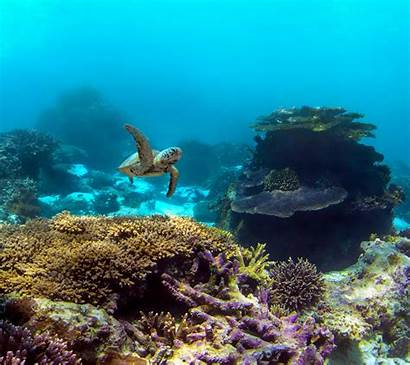 Pixel Wallpapers Google Underwater Official Backgrounds Coral
