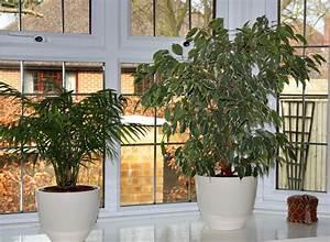 Pflegeleichte Pflanzen Für Die Wohnung : pflegeleichte pflanzen dekorative ideen f r die ~ Michelbontemps.com Haus und Dekorationen