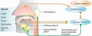 Gastrointestinal Secretion - Physiology