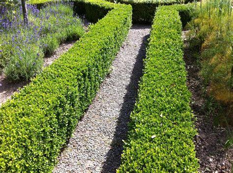 amazon artificial trees uk best hedging plants matthew 39 s picks