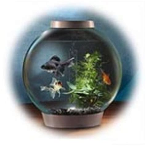 aquarium 80 x 30 x 40 cm biorb classic aquarium 40 x 42 cm 30 litre black intelligent 24hr led light pets