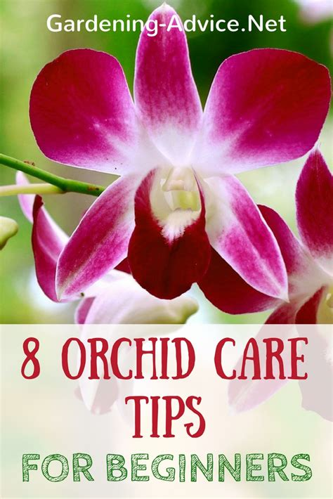 how do i care for an orchid after it blooms growing orchids for beginners orchid care instructions