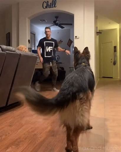 Dogs Falls Them Brian Living Between Conversation