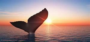 Endroit De Reve : basse californie un voyage de r ve entre baleines otaries et plages d sertes ~ Nature-et-papiers.com Idées de Décoration