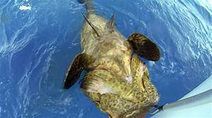 South Florida Fishing Report: Charter Boats Are Catching ...