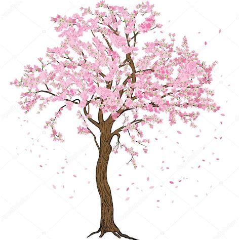 Isolado De Sakura Flor De Primavera Florescendo Rvore Com
