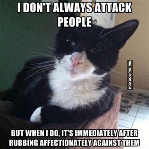 Weird Cat Meme - funny cat attack people meme bajiroo com