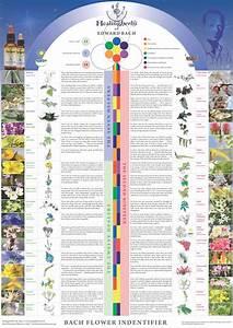 liste fleurs de bach With affiche chambre bébé avec elixirs floraux de bach