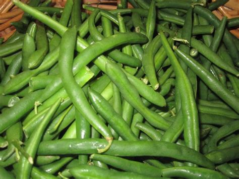 how to freeze string beans freezing green beans misc and garden foods pinterest