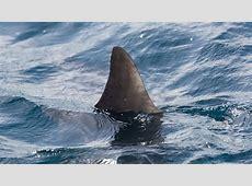Spring breakers beware! More sharks in NC waters abc11com