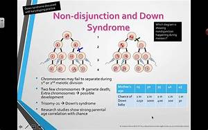 Non-disjunction And Down Syndrome  2016  Ib Biology