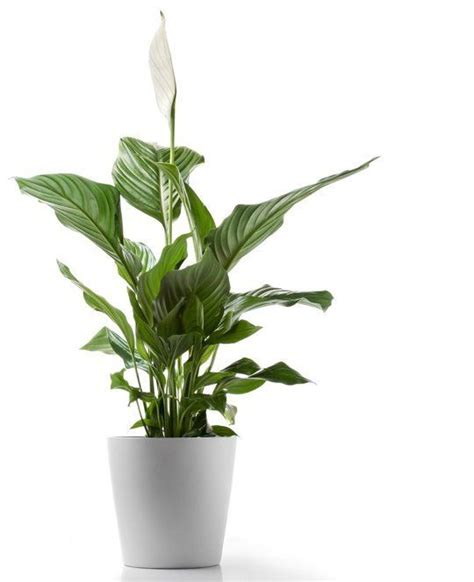 low light houseplants 5 hardy to kill houseplants for apartments with low light apar