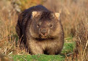 WOMBATS Quotes Like Success