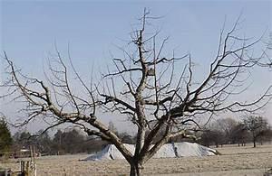 Wann Apfelbäume Schneiden : alte apfelb ume schneiden ~ Lizthompson.info Haus und Dekorationen
