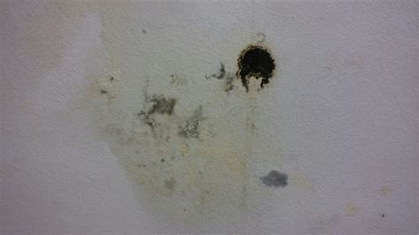 Was Tun Gegen Feuchte Wände by L 246 Sung F 252 R Feuchte W 228 Nde Was Tun Ohne Die Ursache Genau