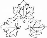 Coloring Leaves Maple Sugar Pages Botanical Create sketch template