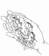 Moss Milkshake Drawing Getdrawings Choice sketch template