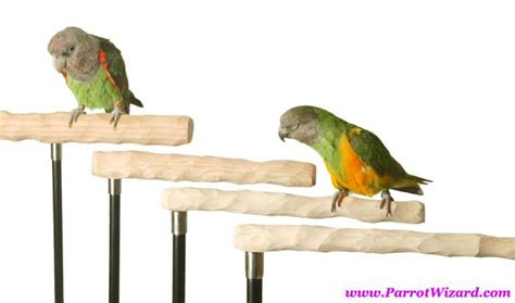 bird perch google search birdcall pinterest birds google search and search