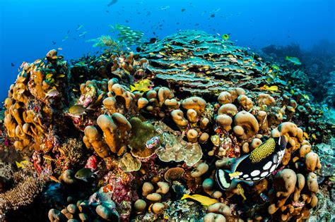 Reef-building coral exhibiting 'disaster traits' similar to last major extinction event