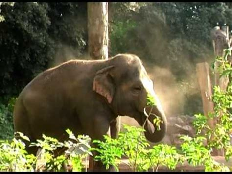 Big Five African Animals