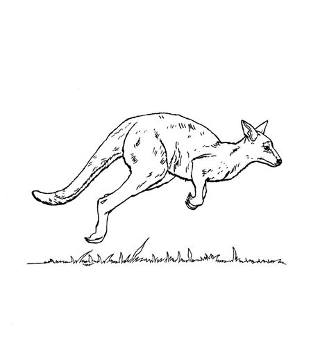 printable kangaroo coloring pages  kids animal place