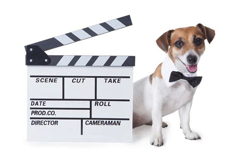 How we came up with this list. Our Top Ten Fictional Dogs | Animal Friends Pet Insurance