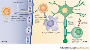 Monoclonal Antibodies For Multiple Sclerosis Treatments