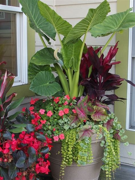 annual flower container ideas summer annual flowers planter alocasia dragon wing begonia lysamachia caladium impatiens