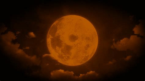 full orange moon pictures   images