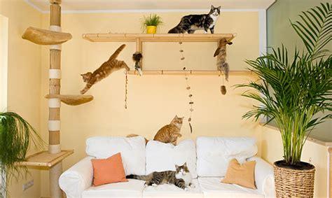 Katze Kleine Wohnung by Das Katzenparadies In Der Wohnung Gu