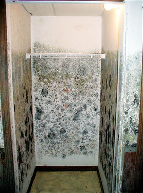 Mold In Closet by Basement Mold Allergens Your Health