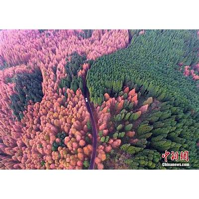 Autumn v.s. summer: the colorful scenery of shanwangping