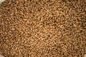 Whiskey Grains 101  How Different Grains Affect Whiskey U0026 39 S