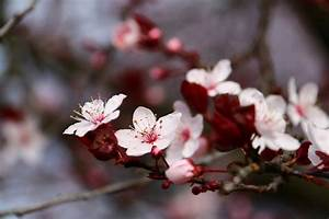 Brookhaven Cherry Blossom Festival 2018 In Atlanta  Ga