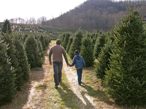 best nc christmas tree farm buy haywood agritourism guide the laurel of asheville