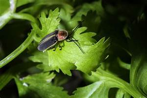 Käfer Im Garten : k fer im garten welche sind n tzlich und welche nicht ~ Lizthompson.info Haus und Dekorationen
