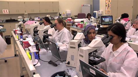 medical laboratory program howard community college hcc