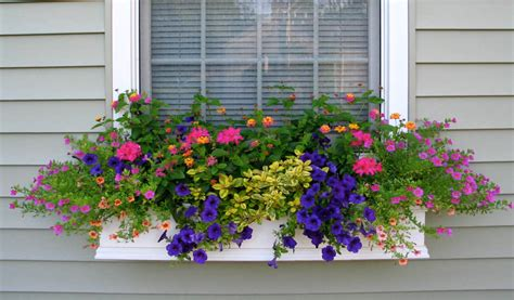 shapes  forms  flowers  window boxes