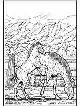 Coloring Adults Horse Pages Horses sketch template