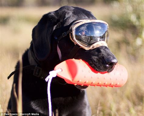 rex specs doggles protect  pets eyes  uv rays