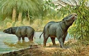 Animals with Trunks: Evolution of Elephants (Blog Post #2)  Phosphatherium