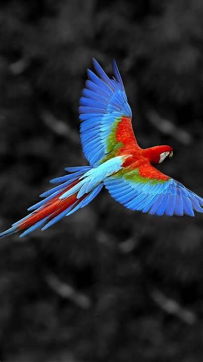Bird Birds Flying Mobile Wallpapers Samsung Flight