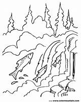 Coloring Waterfall Salmon Fish Warhol Chinook Auburn Printable Sheet Jumping Landscape Cycle Stream Drawing Nature Andy Sream Getcolorings Drawings Printout sketch template